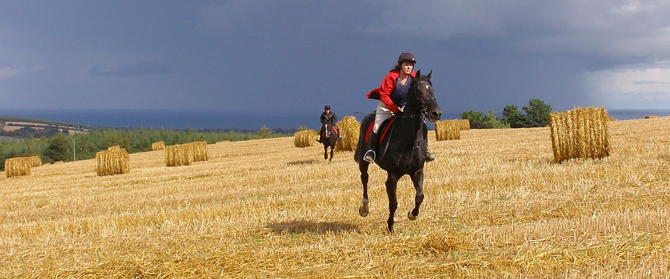 Golden gallop across the stubble field at Bel-Air Riding Holidays Ireland