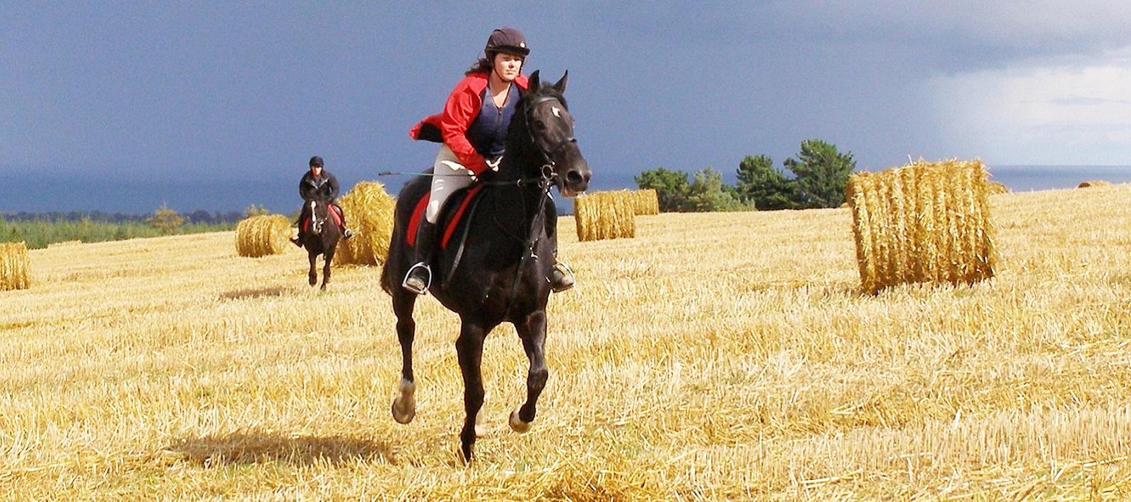 Golden Gallop Across A Stubble Field At Bel-Air Equestrian