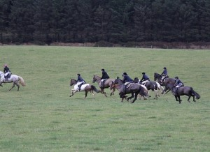 And they are off a Mock Hunt Bel-Air Equestrian Centre