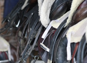 Comfy saddles back from the day's work and waiting to be cleaned