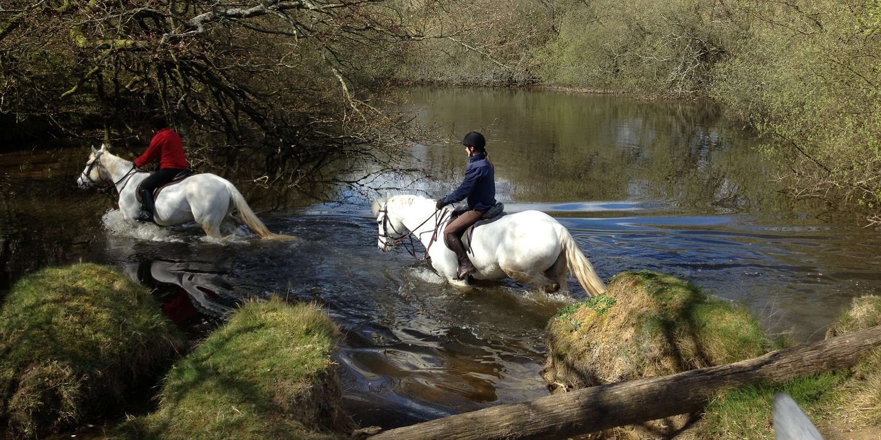 Cooling Off In The Pond At Bel-Air Equestrian Centre
