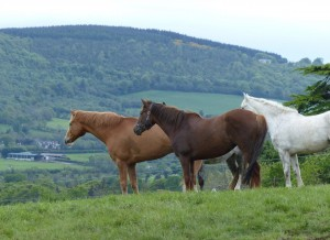Do like the Bel-Air horses - enjoy the Wicklow views during your holidays
