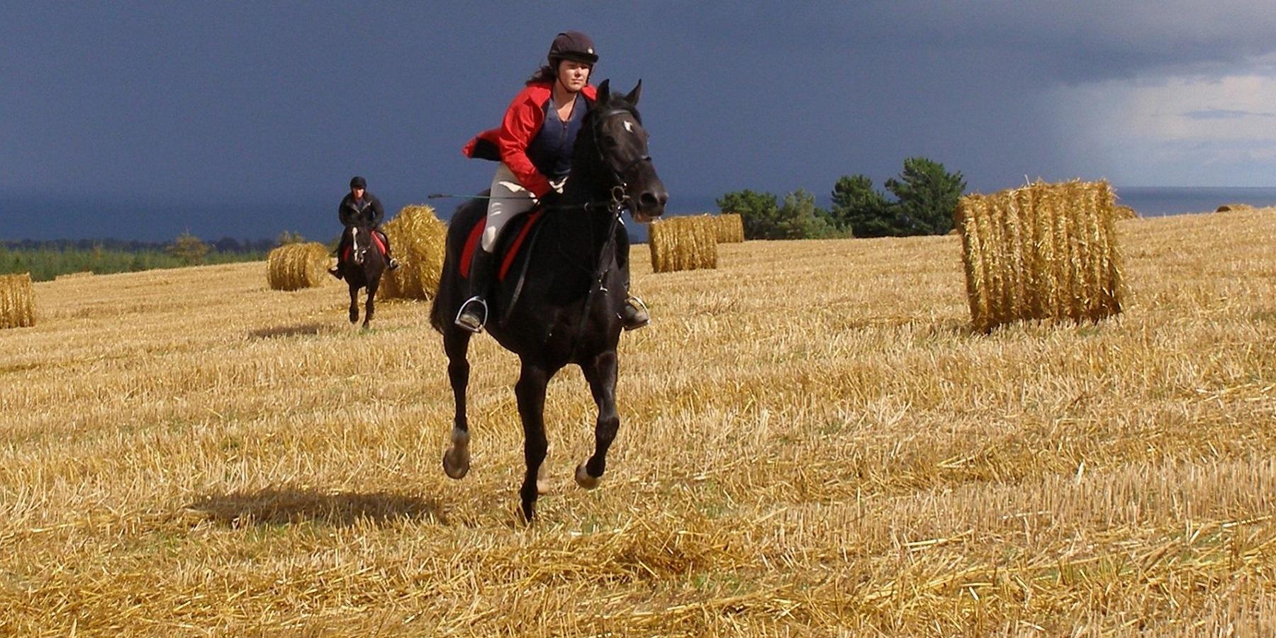 Golden Gallop Across A Stubble Field At Bel-Air