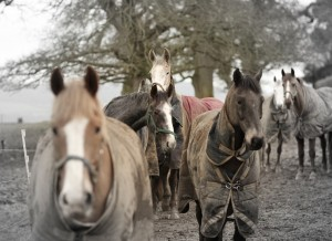 Happy horses in the field