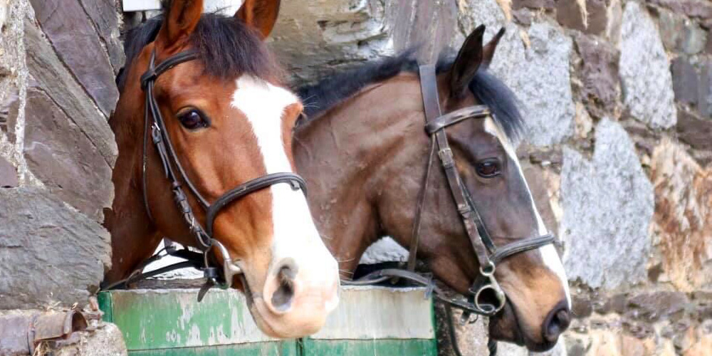 Miley and Scout can't wait to get going_Happy horses at Bel-Air Equestrian Centre Co Wicklow