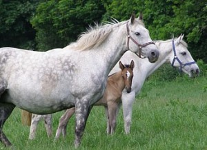 Pangea, Misty and foal at Bel-Air-2