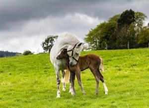 Pangea hugging her foal at Bel-Air Equestrian Centre, Ashford, Ireland